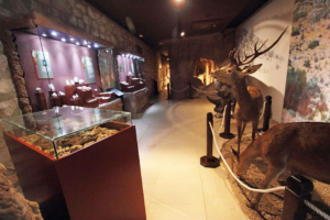 La Delegación de Patrimonio Histórico y 'Tu Historia' programan una jornada de puertas abiertas en el Museo Arqueológico y Etnológico de Lucena en el Castillo del Moral   Red de Juderías de España